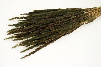TRAWA LEŚNA KOLOR BRUNATNY trawa suszona barwiona