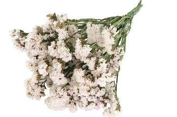 ZATRWIAN WRĘBNY KOLOR BIAŁY (Limonium) suszki ozdobne kwiaty suszone dodatek do stroików i wianków