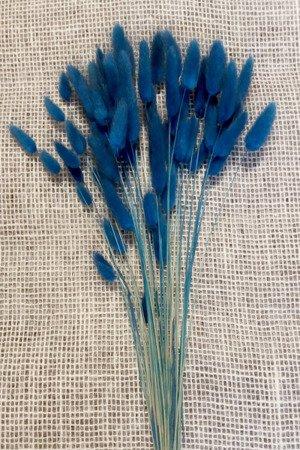DMUSZEK JAJOWATY KOLOR GRANATOWY (chabrowy) pęczek XL ~70 szt. (Lagurus ovatus) ozdobna trawa suszona