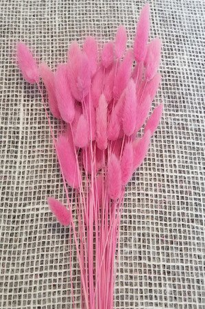 DMUSZEK JAJOWATY KOLOR RÓŻOWY (Lagurus ovatus) trawa suszona barwiona