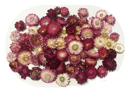 KOCANKA SUSZONA MIX RÓŻOWY (suchołuska, nieśmiertelnik) kwiaty suszone suszki dekoracyjne