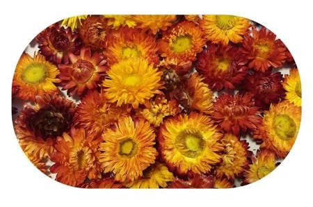 KOCANKA SUSZONA MIX ŻÓŁTO-RUDY (suchołuska, nieśmiertelnik, Helichrysum) kwiaty suszone suszki dekoracyjne