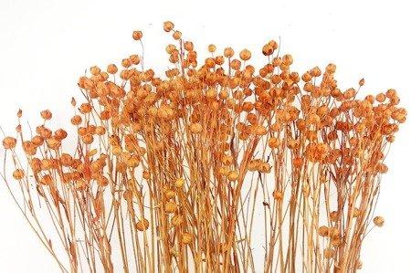 LEN KOLOR JASNOPOMARAŃCZOWY 2 suszony barwiony dodatek florystyczny pęczek 45-50 cm
