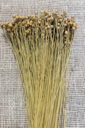 LEN KOLOR NATURALNY suszony niebarwiony dodatek florystyczny pęczek 35-50 cm