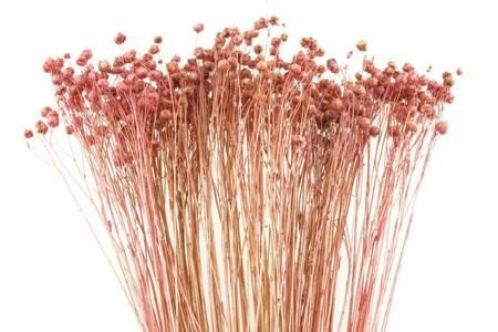 LEN KOLOR RÓŻOWY suszony barwiony pęczek 45-50 cm susz krajowy