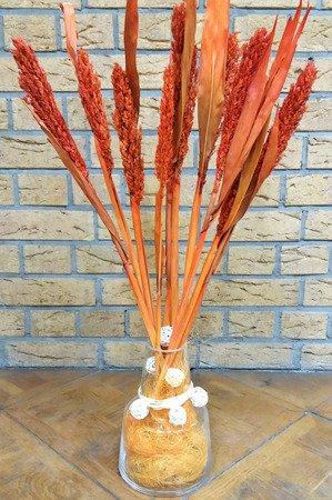 SENEGAL SORGO KOLOR RÓŻOWY susz roślinny do dekoracji rośliny na suche bukiety