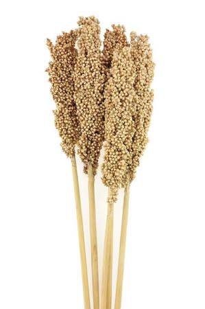 SORGO MILLO KOLOR NATURALNY 5 szt. Sorghum niebarwiony susz roślinny do dekoracji rośliny na suche bukiety