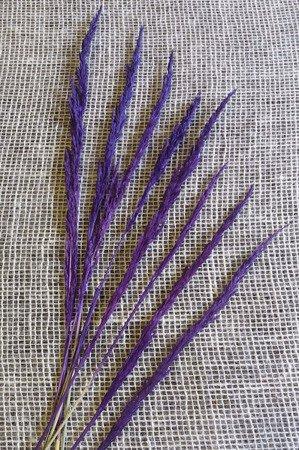 TRAWA LEŚNA KOLOR FIOLETOWY trawa suszona barwiona do stroików