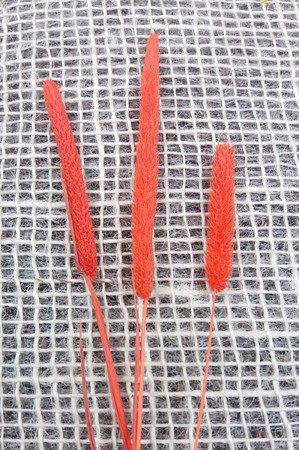 TYMOTKA ŁĄKOWA KOLOR JASKRAWOPOMARAŃCZOWY Phleum pratense (brzanka pastewna) ozdobna trawa suszona
