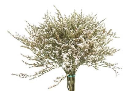 ZATRWIAN TATARSKI KOLOR NATURALNY BIAŁY (Goniolimon tataricum) statica suszki ozdobne kwiaty suszone dodatek do stroików i wianków